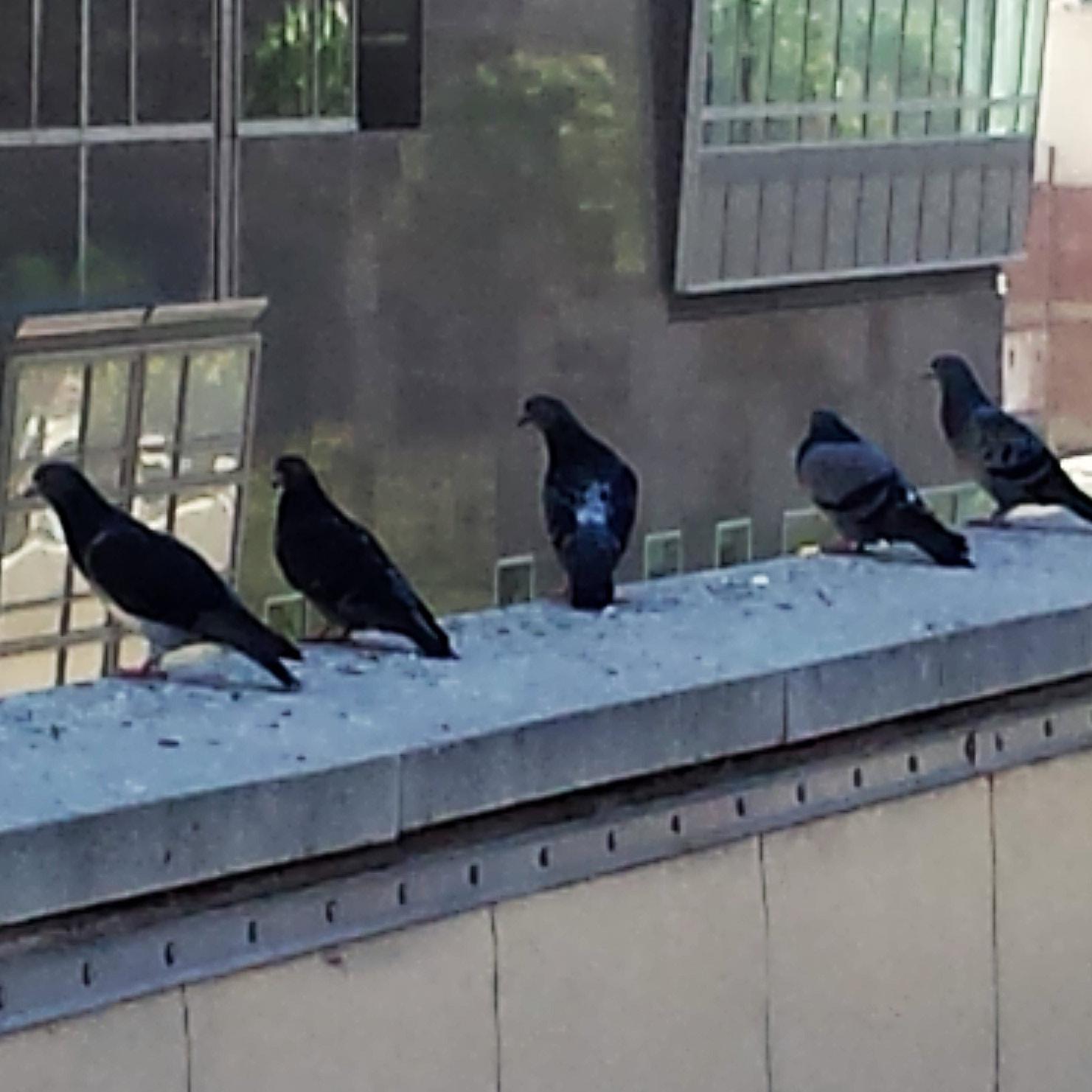 Birds lining up