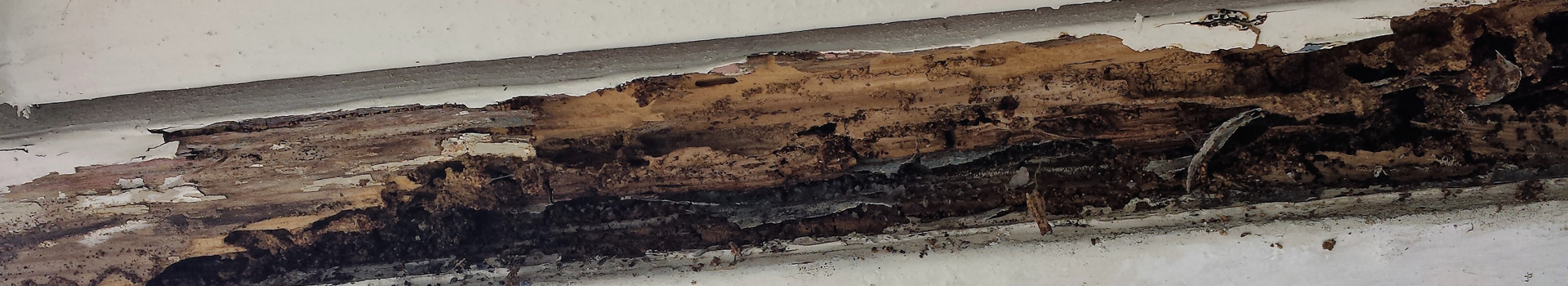 A house eaten by termites