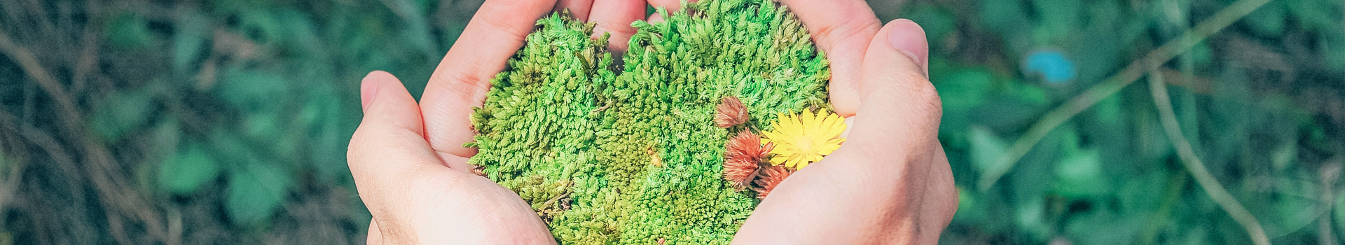 A plant in a hand