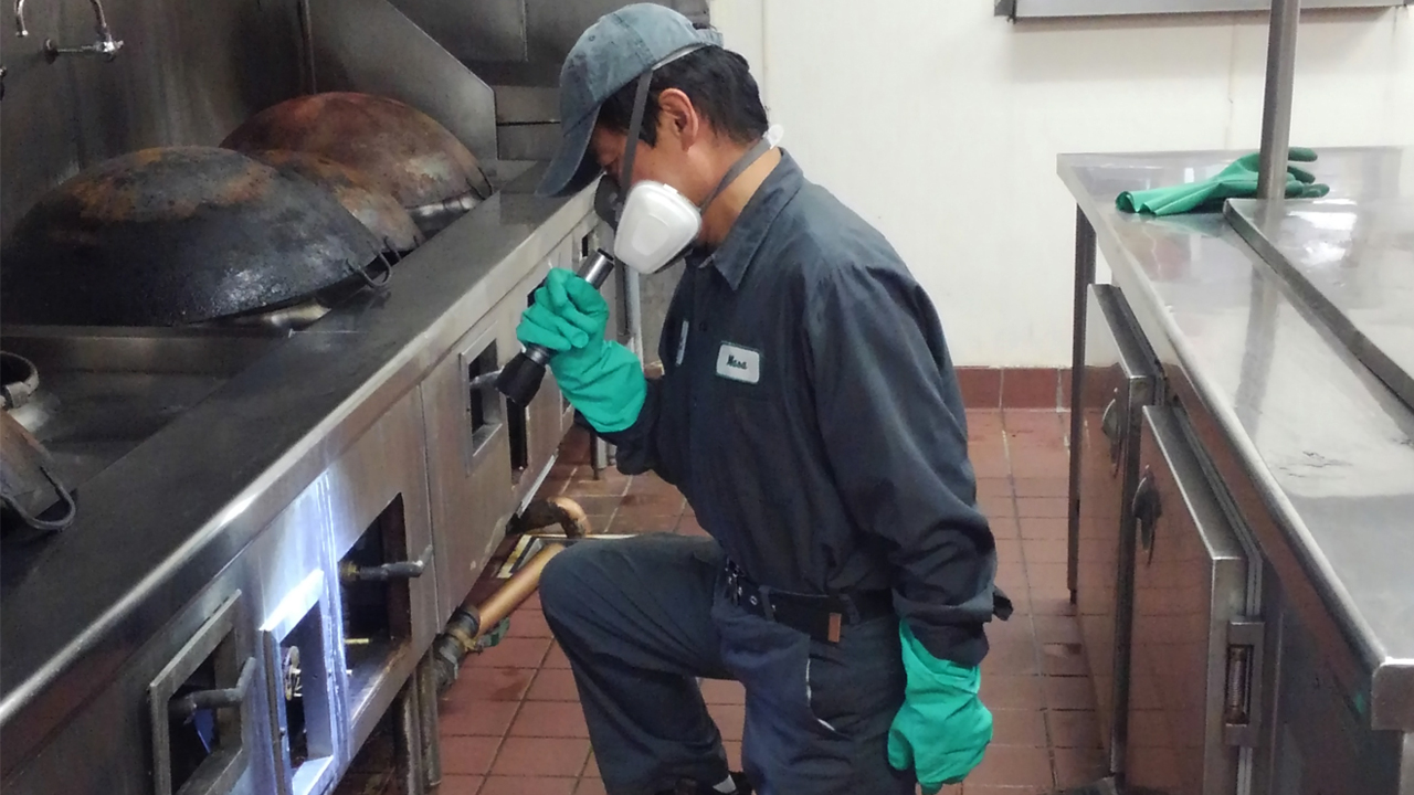 Cats USA staff for pest control inspection in restaurant